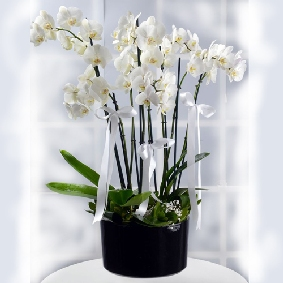 8 VIP Orchids